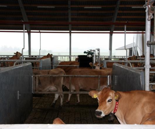 Gangsystem I Kvægstald